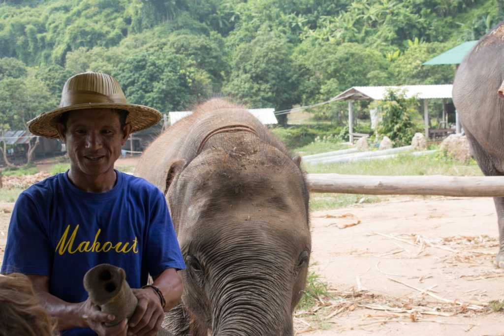 Mahout at Elephant Camp, North Thailand