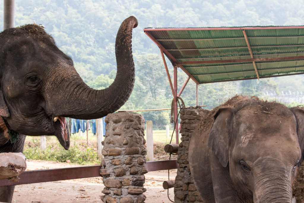 Elephants at Elephant Camp, Northern Thailand