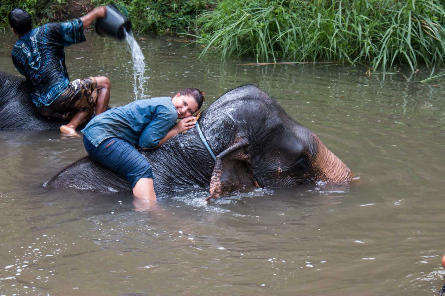 Elephant Riding in Thailand: Please don't do it. Here's why.
