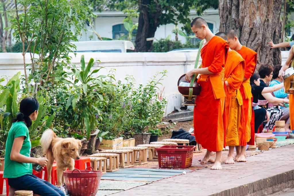 Monk procession, Giving alms. in Luang Prabang, Lao