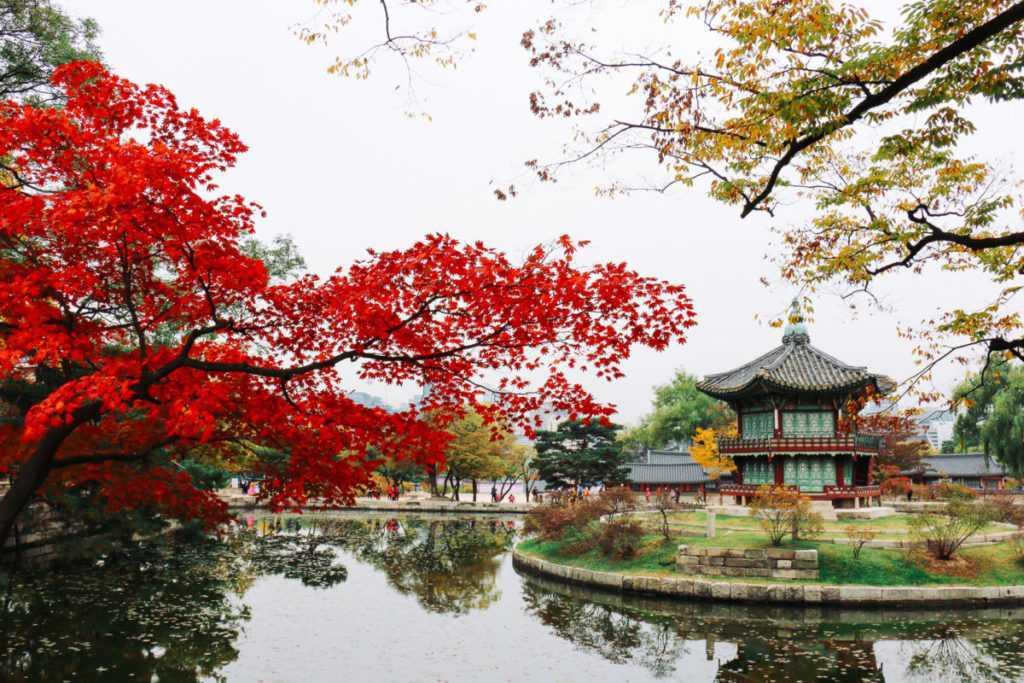 herbst im garten gyeongbokgung palast seoul korea