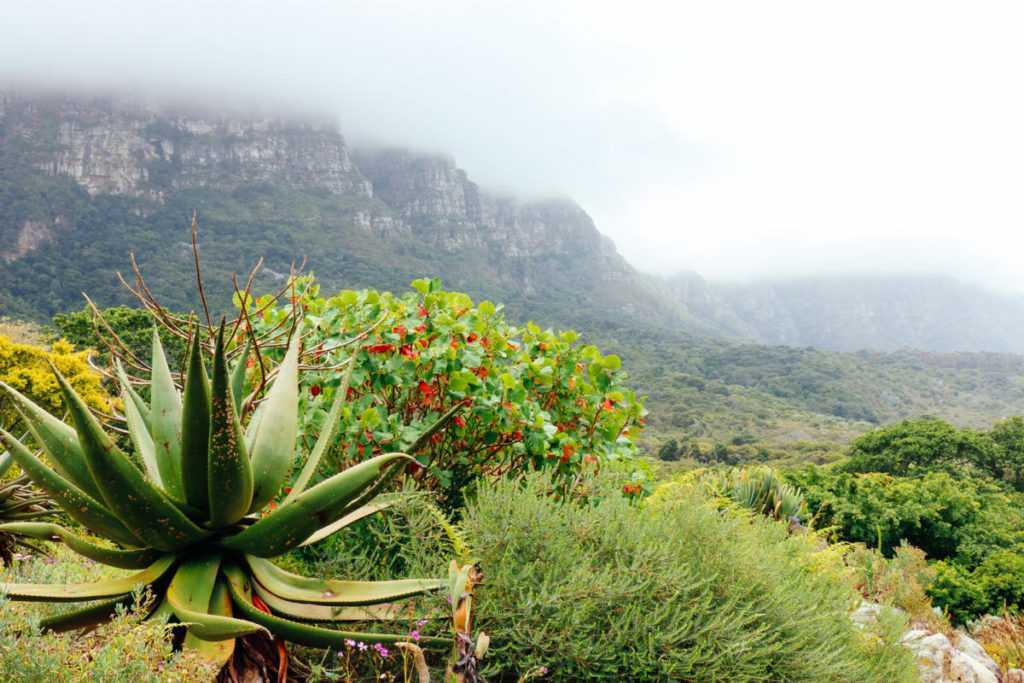 kirstenbosch table mountain