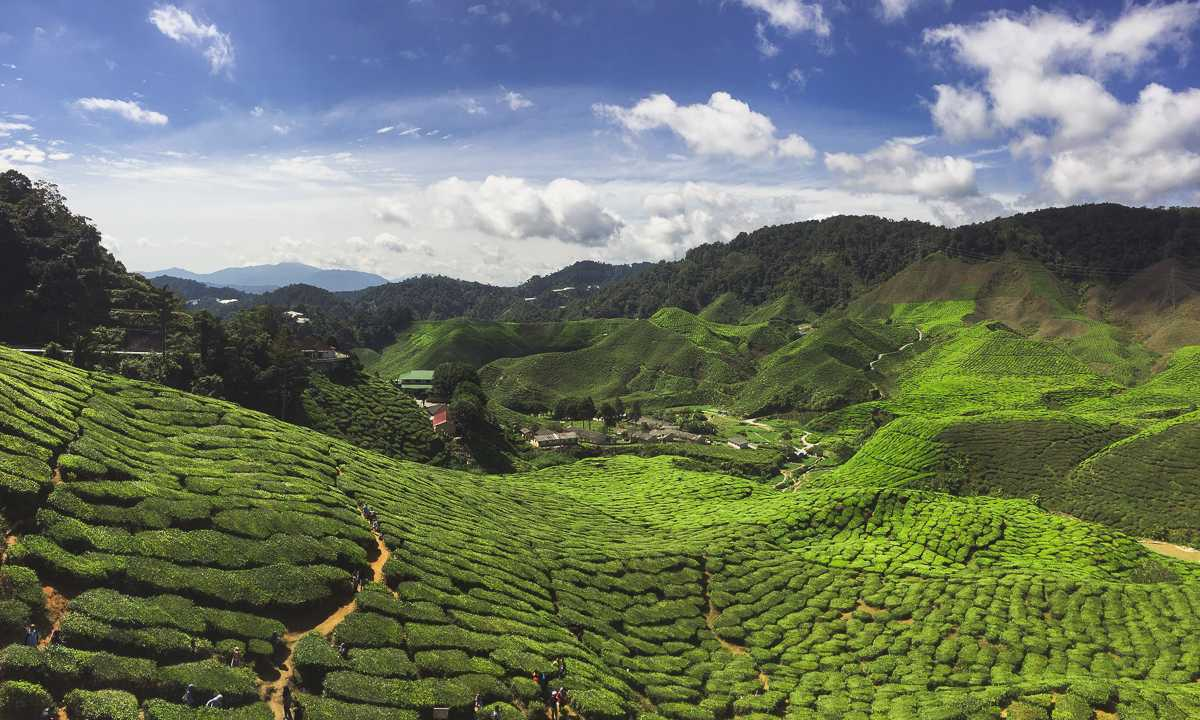 Cameron Highlands Teeplantagen Boh Tea