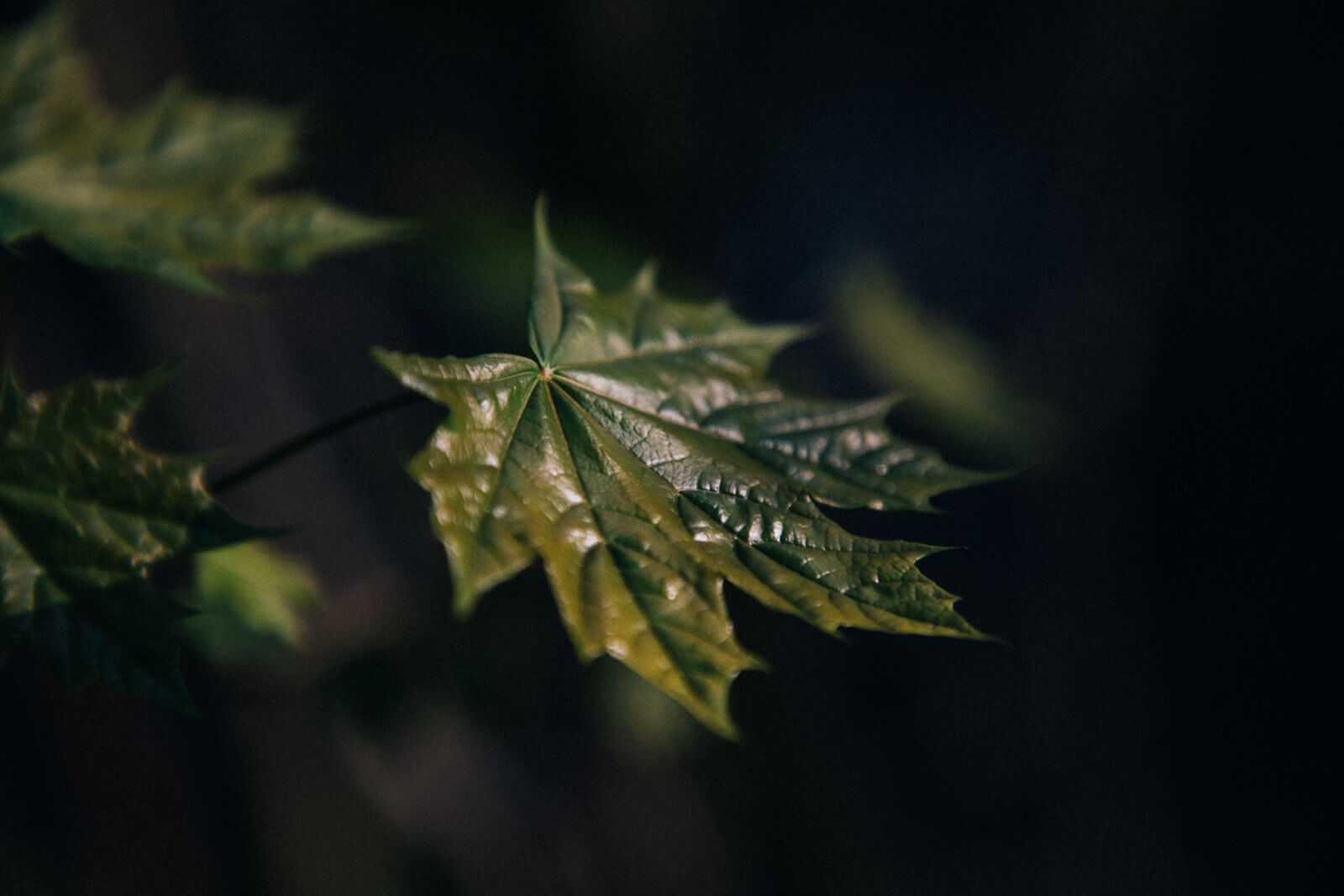 Radtour Dahme Wald und Müggelsee Blätter im Dunkeln