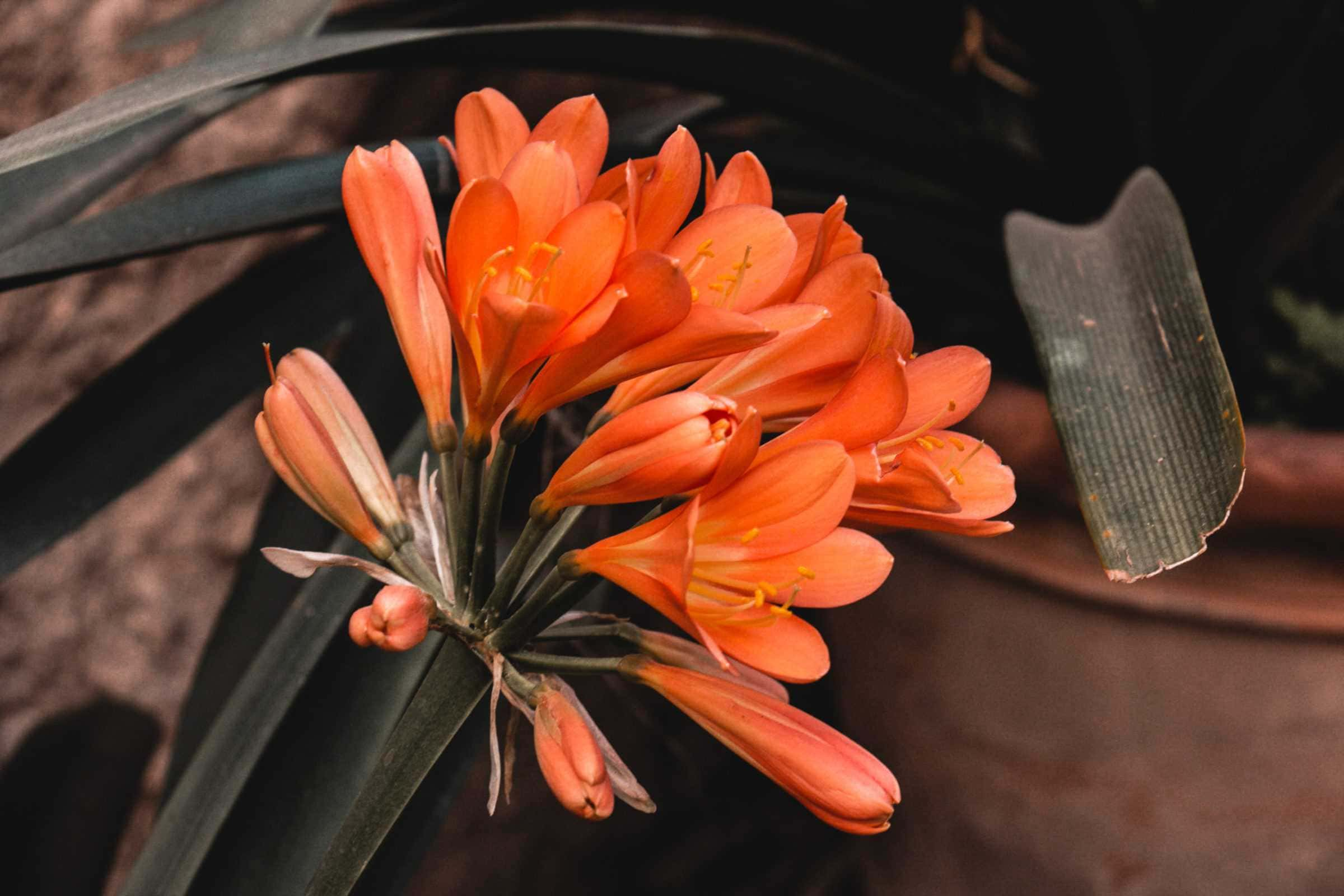 Bunte Blüten im Garten banys arabs palma de mallorca