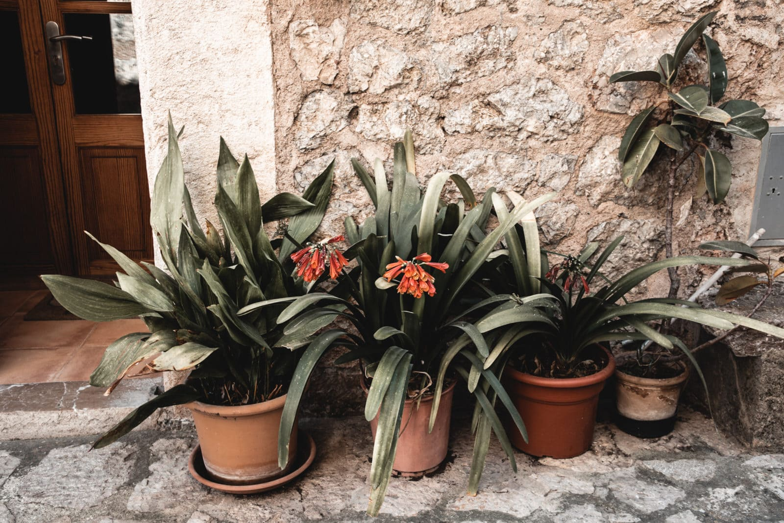 Valldemossa Mallorca Altstadt Gassen Blumen