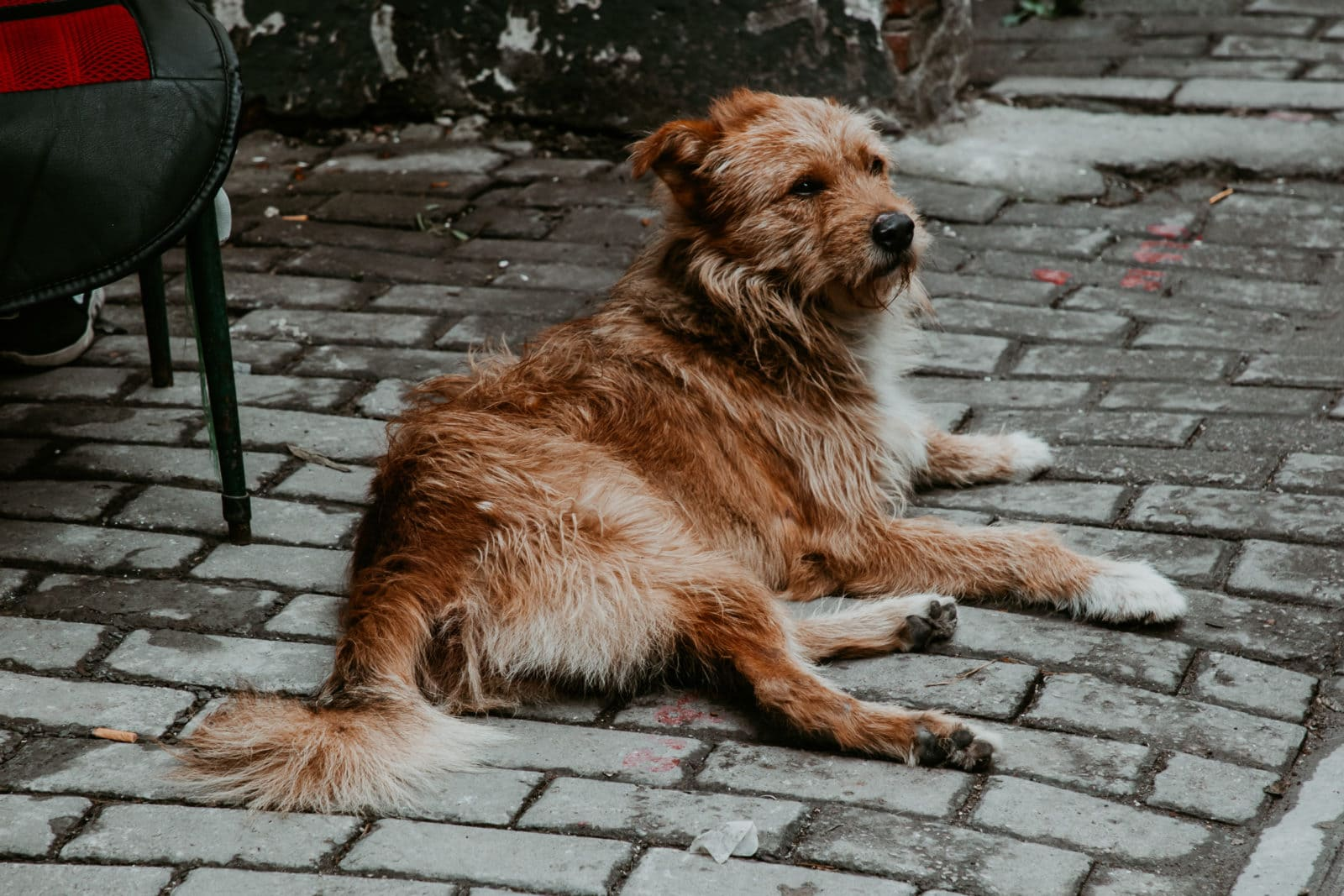 Hund in der Shantang Street Suzhou