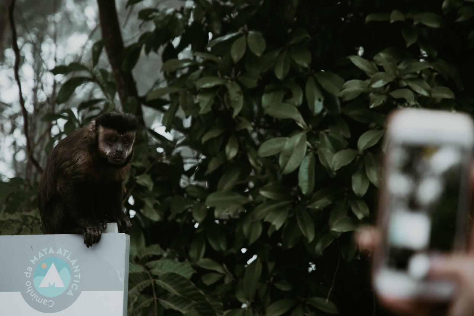 Rio de Janeiro Sehenswürdigkeiten Tijuca Nationalpark Affe