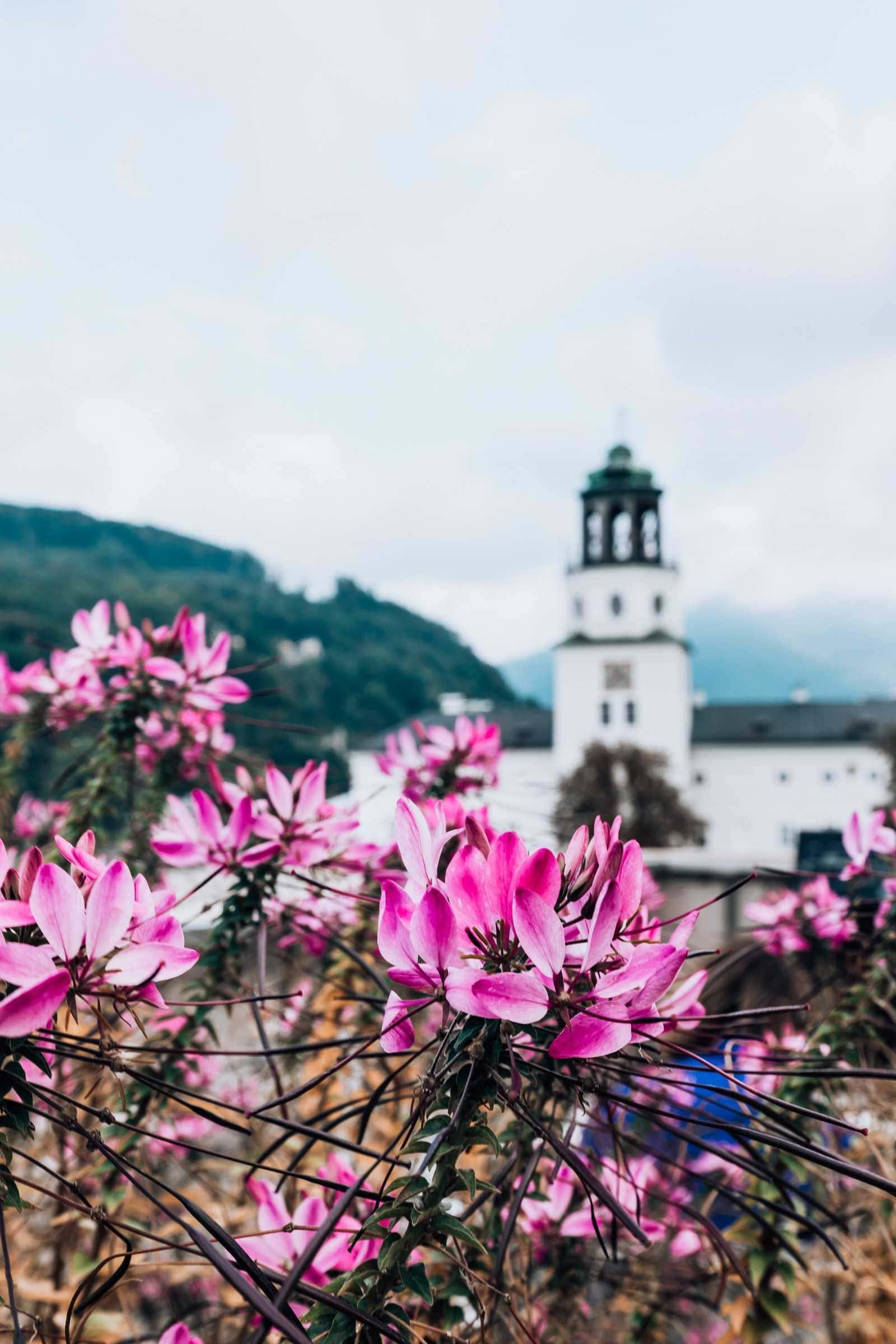 Salzburg Museum mit Blumen im Vordergrund