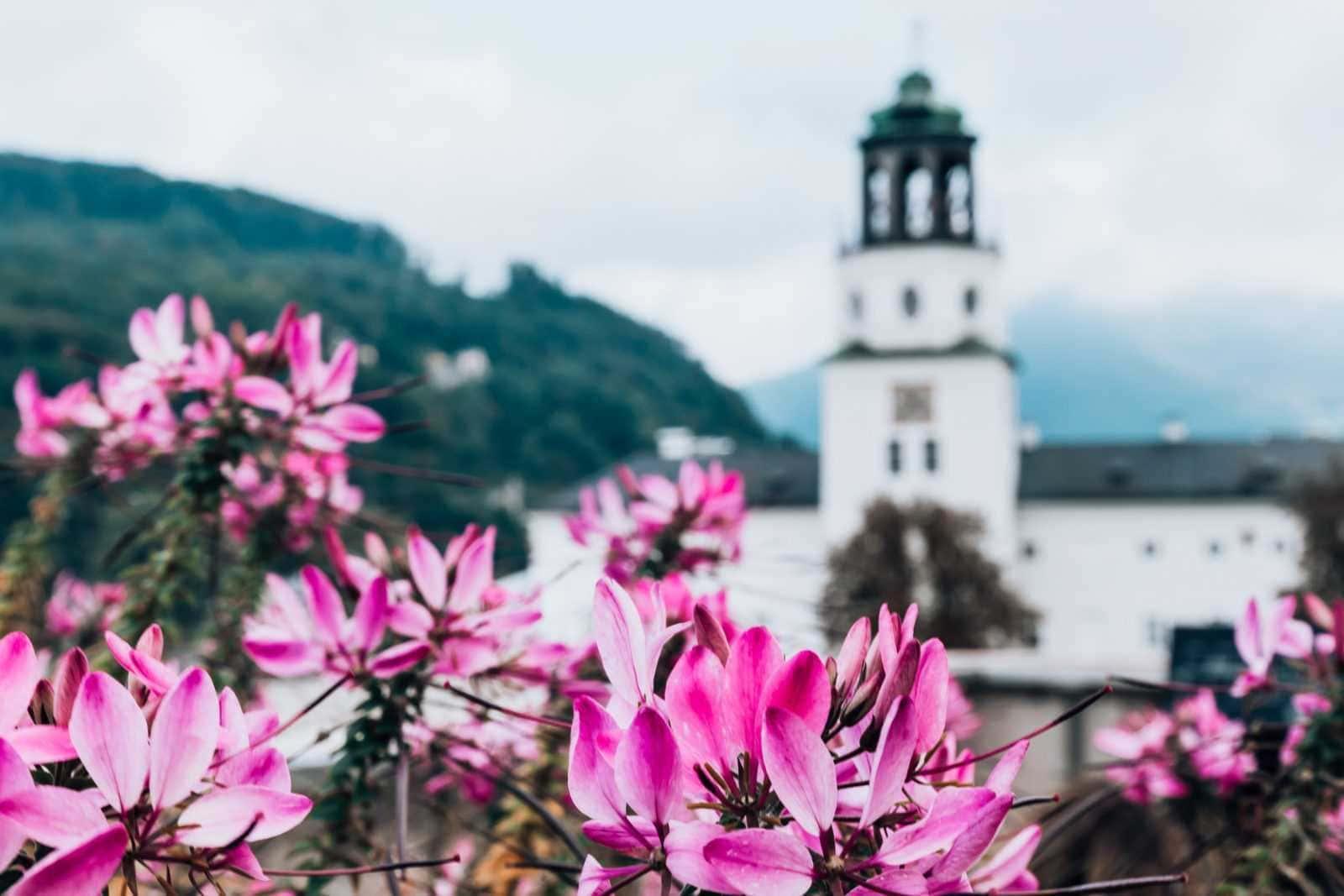 Blick auf das Salzburg Museum mit pinkfarbenen Blumen im Vordergrund