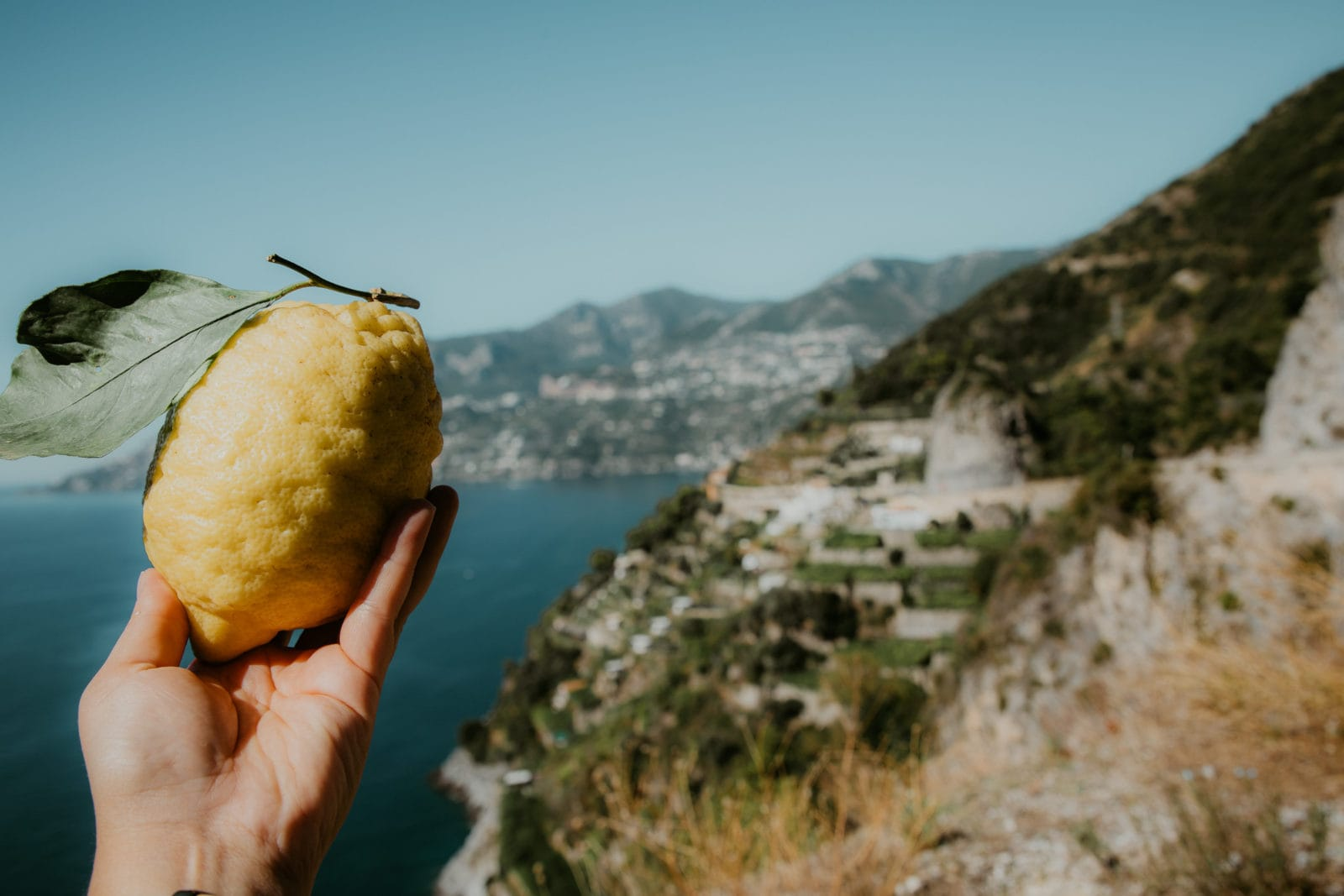 Amalfitana Zitronen