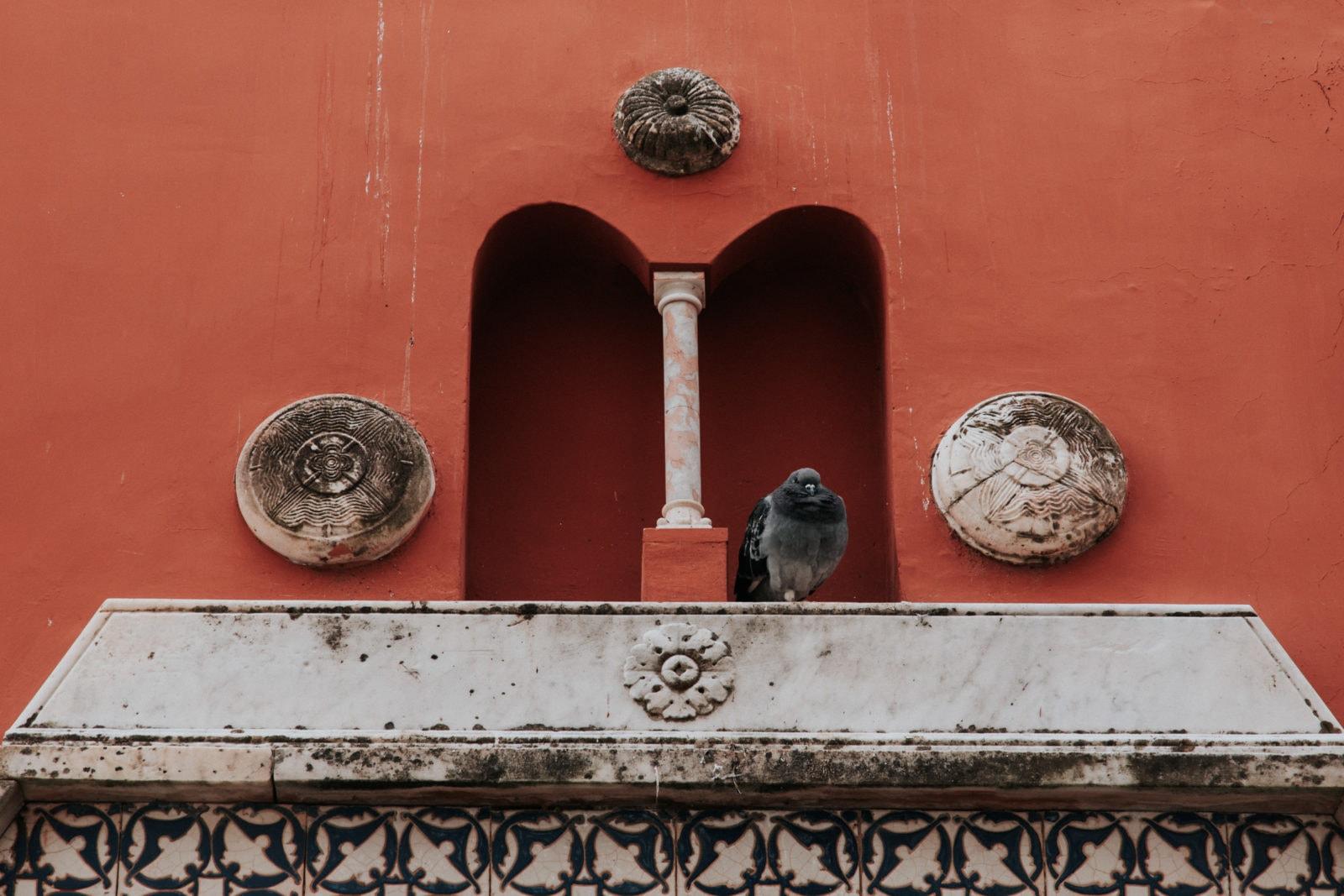 Taube auf Museo Casa Rossa di Anacapri Capri