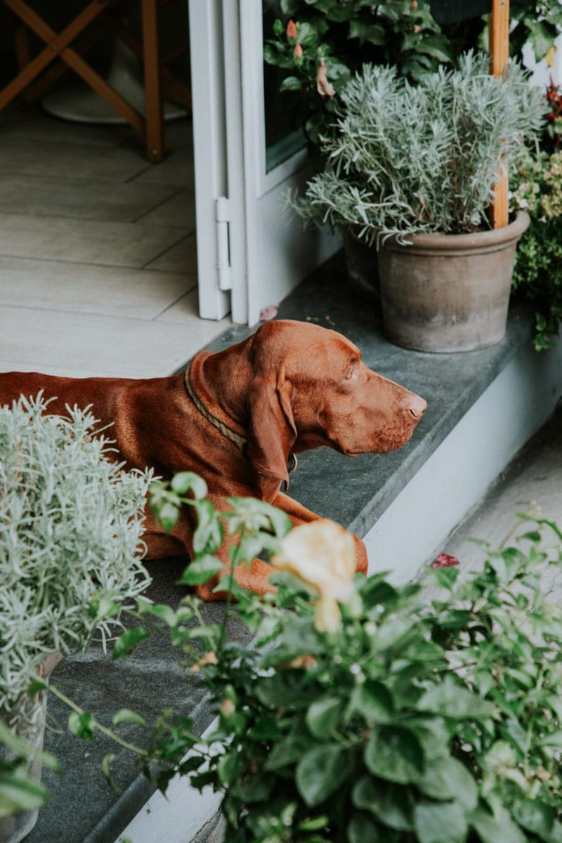 Positano Italy Casa e Bottega Dog