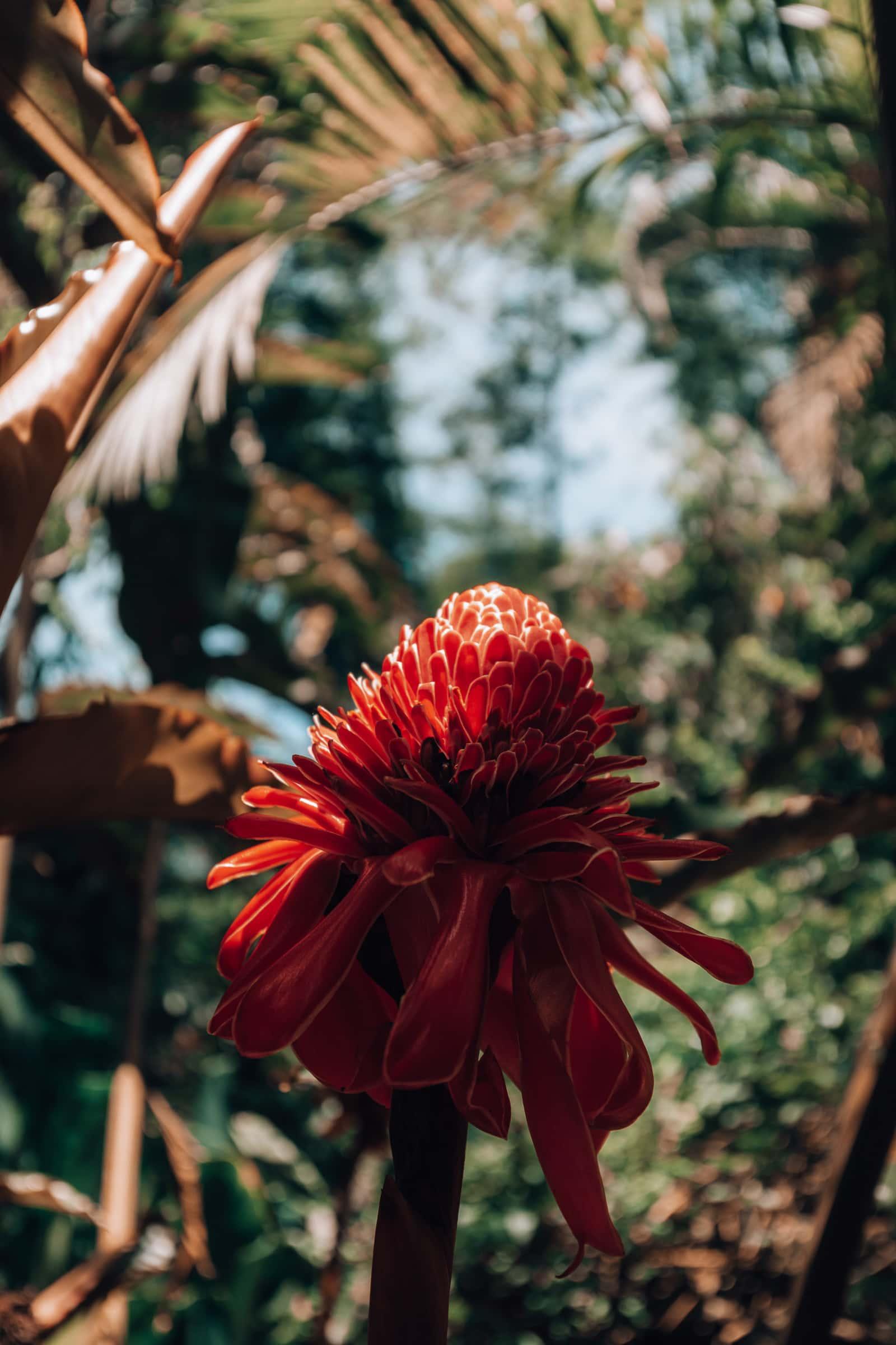 Exotische rote Blüte