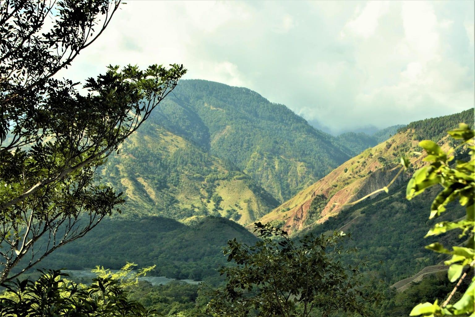Jamaika Blue Mountains Kaffee