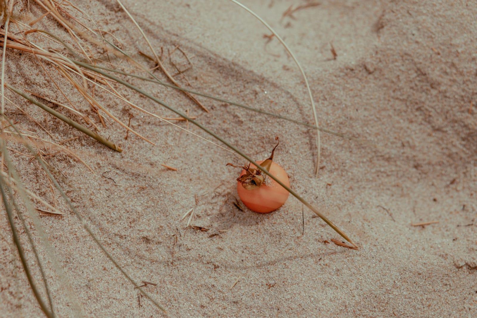 Sylt: Bildungsurlaub mit Yoga, Strand & Meer 30