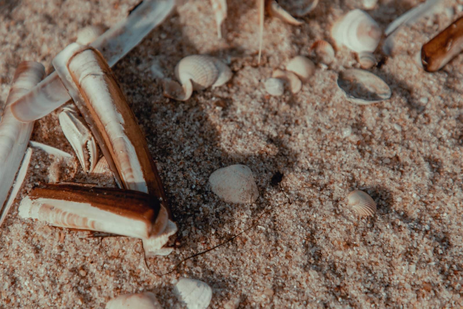 Sylt: Bildungsurlaub mit Yoga, Strand & Meer 18