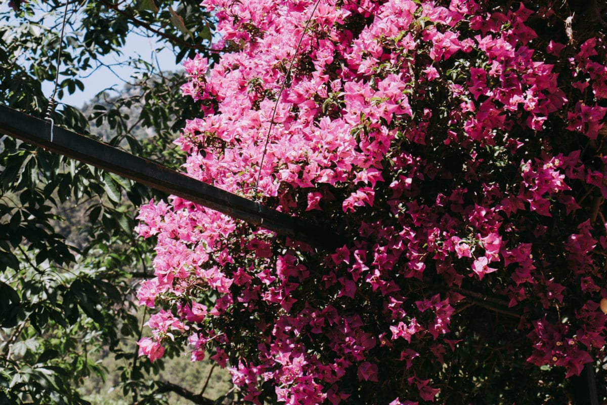 Botanischer Garten Jardines de Alfabia Mallorca
