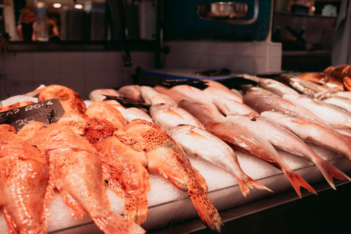 Fresh fish in Mallorca